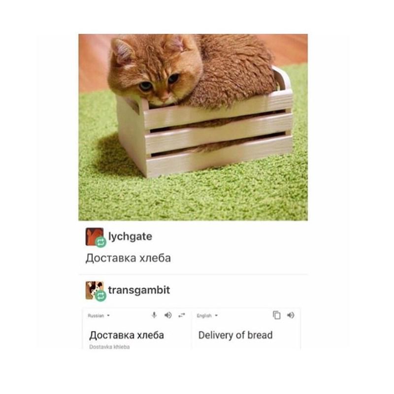 Cat - lychgate Доставка хлеба transgambit Russian- English- Доставка хлеба Delivery of bread Dostavka khieba