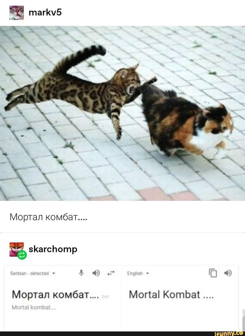 Cat - markv5 Мортал комбат.... skarchomp Serbian - detected English Мортал комбат.... . Mortal Kombat ... Mortal kombat. ifunny.co