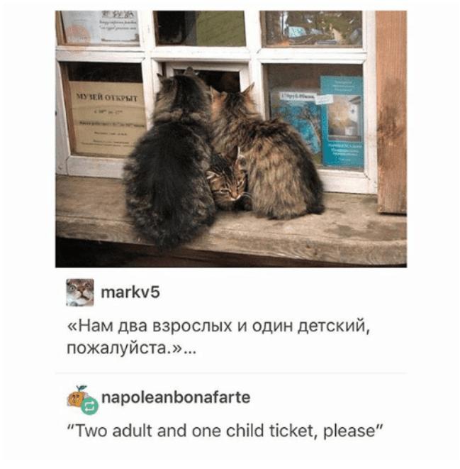"Cat - OPEA MYER OTKPIT markv5 «Нам два взрослых и один детский, пожалуйста.».. napoleanbonafarte ""Two adult and one child ticket, please"""