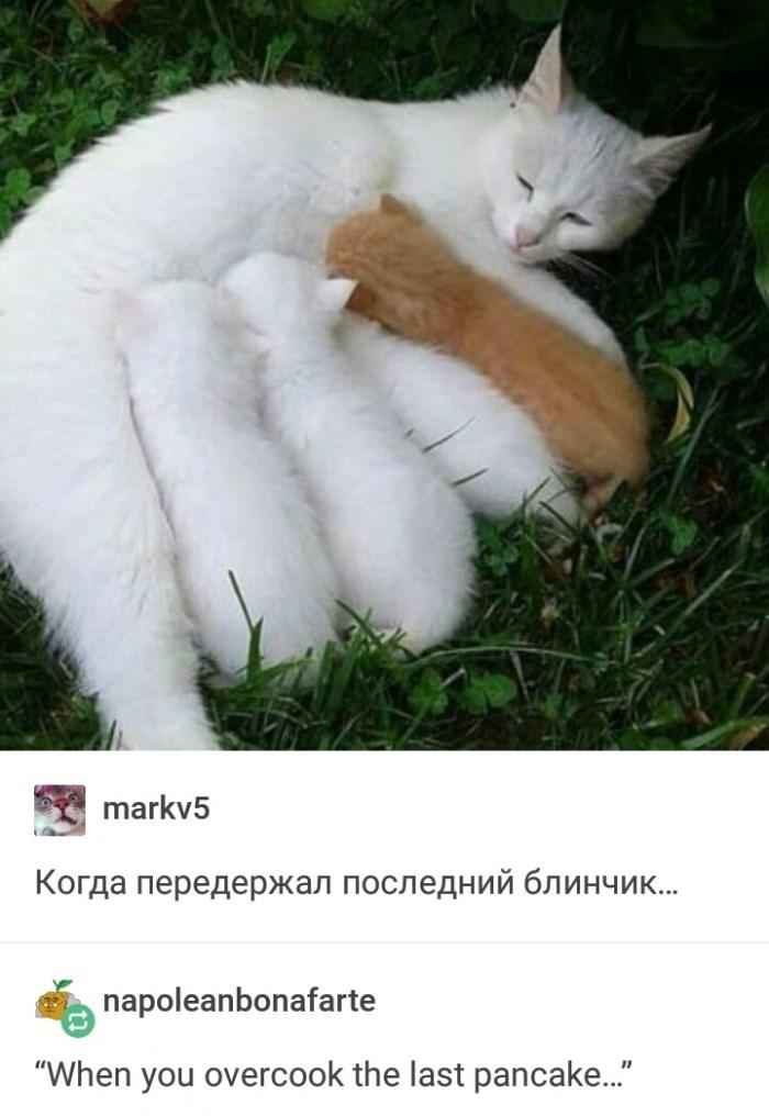 "Cat - markv5 Когда передержал последний блинчик... napoleanbonafarte ""When you overcook the last pancake.."""