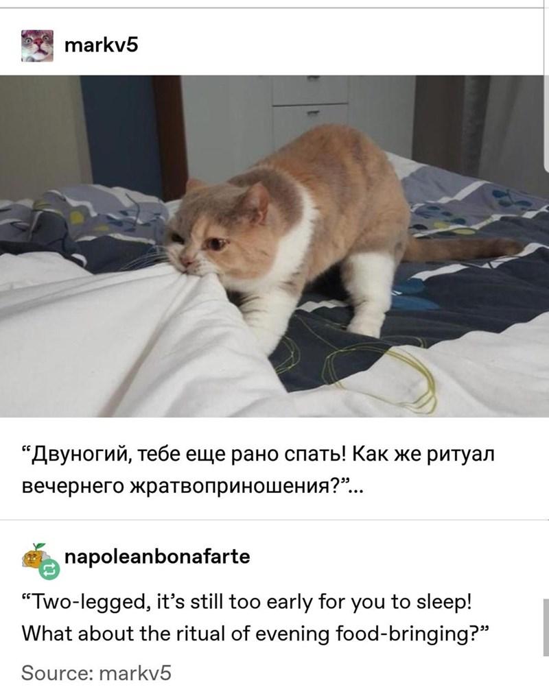 "Cat - markv5 ""Двуногий, тебе еще рано спать! Как же ритуал вечернего жратвоприношения?""... napoleanbonafarte ""Two-legged, it's still too early for you to sleep! What about the ritual of evening food-bringing?"" Source: markv5"