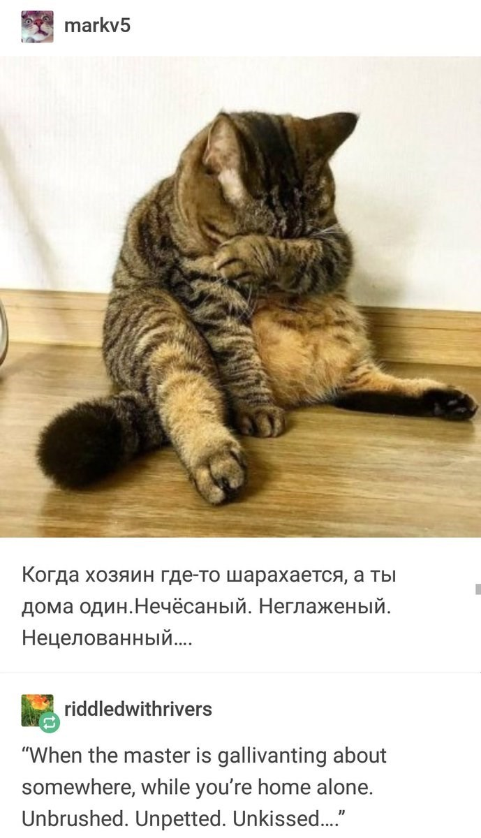 """Cat - markv5 Когда хозяин где-то шарахается, а ты дома один.Нечёсаный. Неглаженый. Нецелованный... riddledwithrivers """"When the master is gallivanting about somewhere, while you're home alone. Unbrushed. Unpetted. Unkisse.."""""""