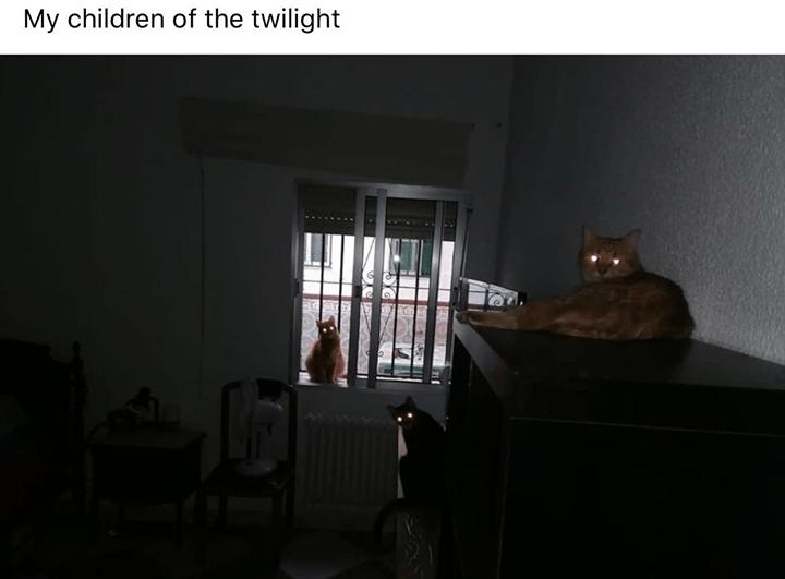 Room - My children of the twilight