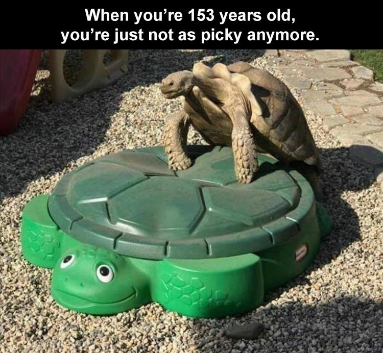 Tortoise - When you're 153 years old, you're just not as picky anymore.