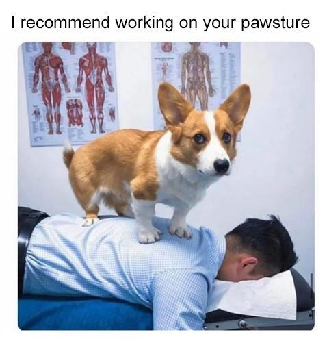 Dog - I recommend working on your pawsture