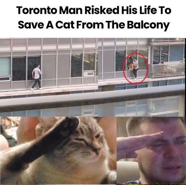 Cat - Toronto Man Risked His Life To Save A Cat From The Balcony