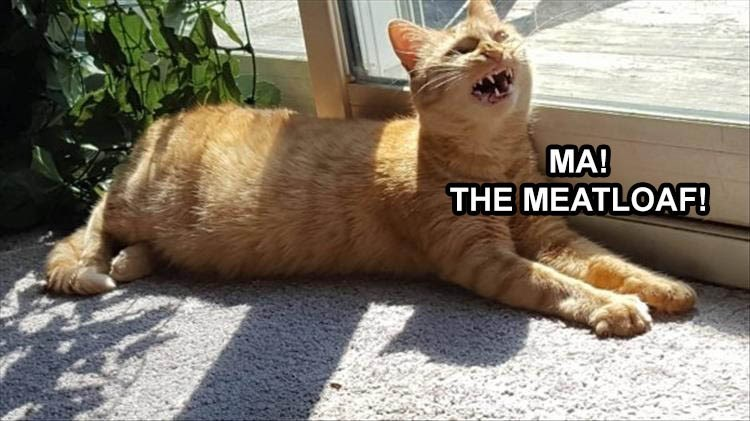 MA! THE MEATLOAF! orange cat screaming while lying down by a window