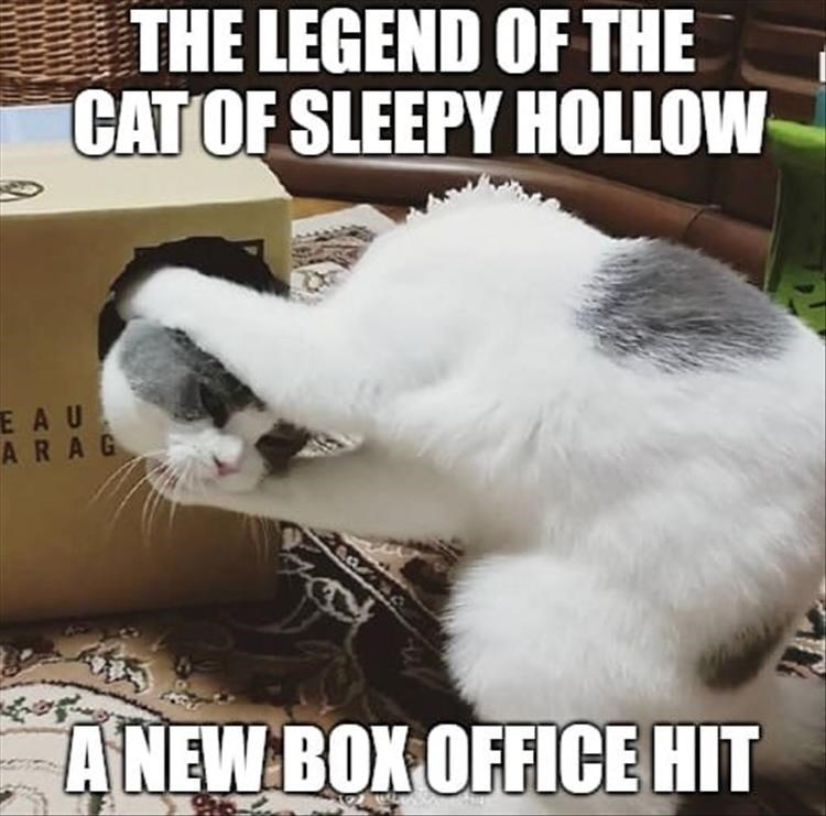 THE LEGEND OF THE CAT OF SLEEPY Hollow BOX OFFICE HIT headless cat holding a head