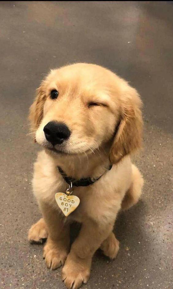 Dog - GOOD BOY # 1