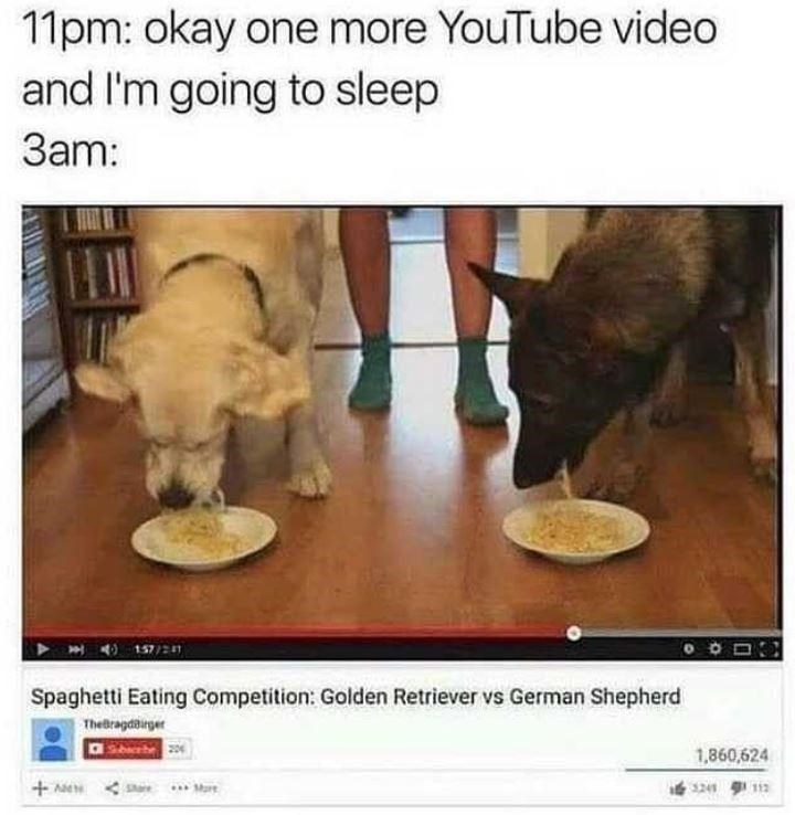 Photo caption - 11pm: okay one more YouTube video and I'm going to sleep 3am: 157/21 Spaghetti Eating Competition: Golden Retriever vs German Shepherd Thebragdairger 1,860,624 + Ae < S 112