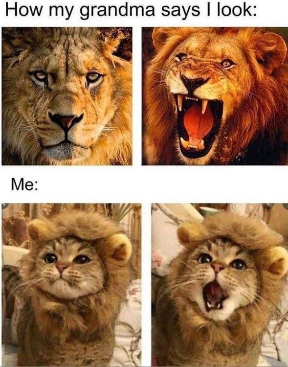 Wildlife - How my grandma says I look: Me: