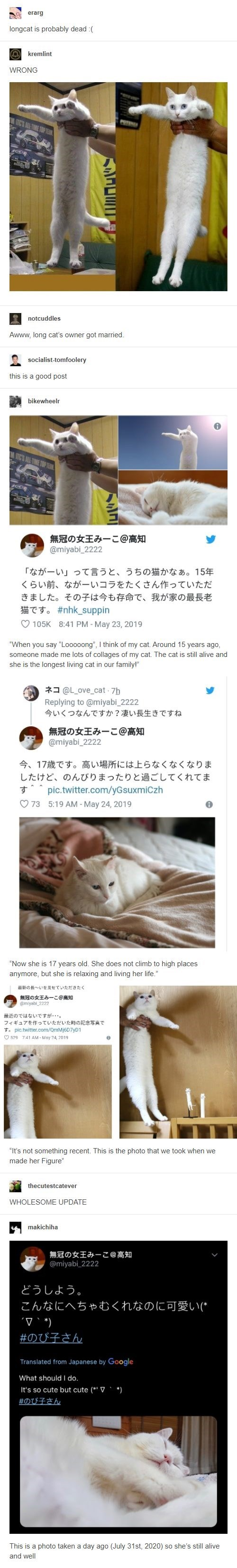 """Text - erarg longcat is probably dead :( O kremlint WRONG M ITC'S ALL TIME TOP TEAN notcuddles Awww, long cat's owner got married. socialist-tomfoolery this is a good post bikewheelr M IIC'S ALL TIME TOP TEAM 無冠の女王みーこ@高知 @miyabi_2222 「なが一い」って言うと、うちの猫かなあ。15年 くらい前、なが一いコラをたくさん作っていただ きました。その子は今も存命で、 我が家の最長老 T T. #nhk_suppin O 105K 8:41 PM - May 23, 2019 """"When you say """"Looooong"""", I think of my cat. Around 15 years ago, someone made me lots of collages of my cat. The cat is still alive and she is the"""