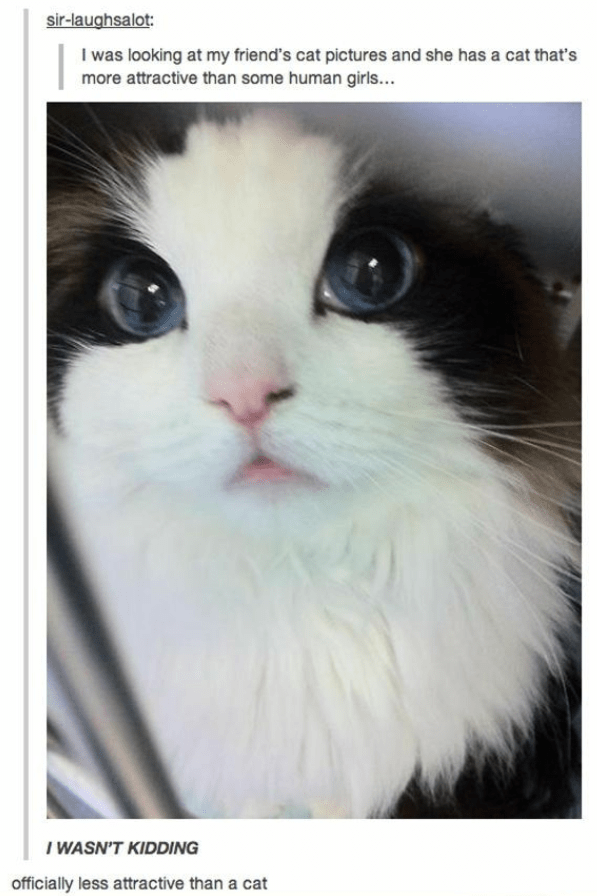 Cat - sir-laughsalot: I was looking at my friend's cat pictures and she has a cat that's more attractive than some human girls... I WASN'T KIDDING officially less attractive than a cat
