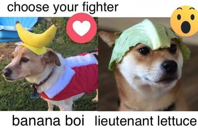 Dog - choose your fighter banana boi lieutenant lettuce