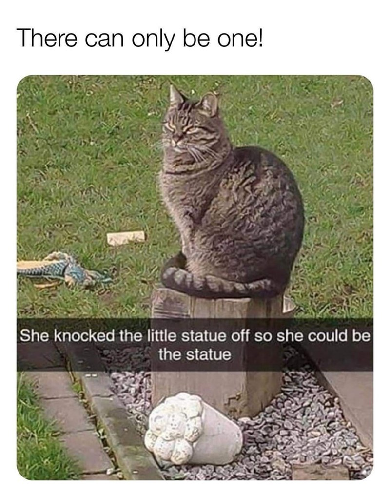Cat - There can only be one! She knocked the little statue off so she could be the statue