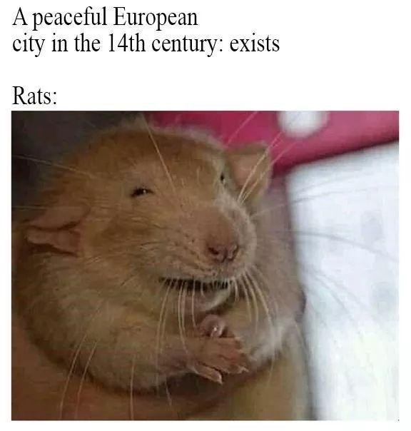 Mammal - A peaceful European city in the 14th century: exists Rats:
