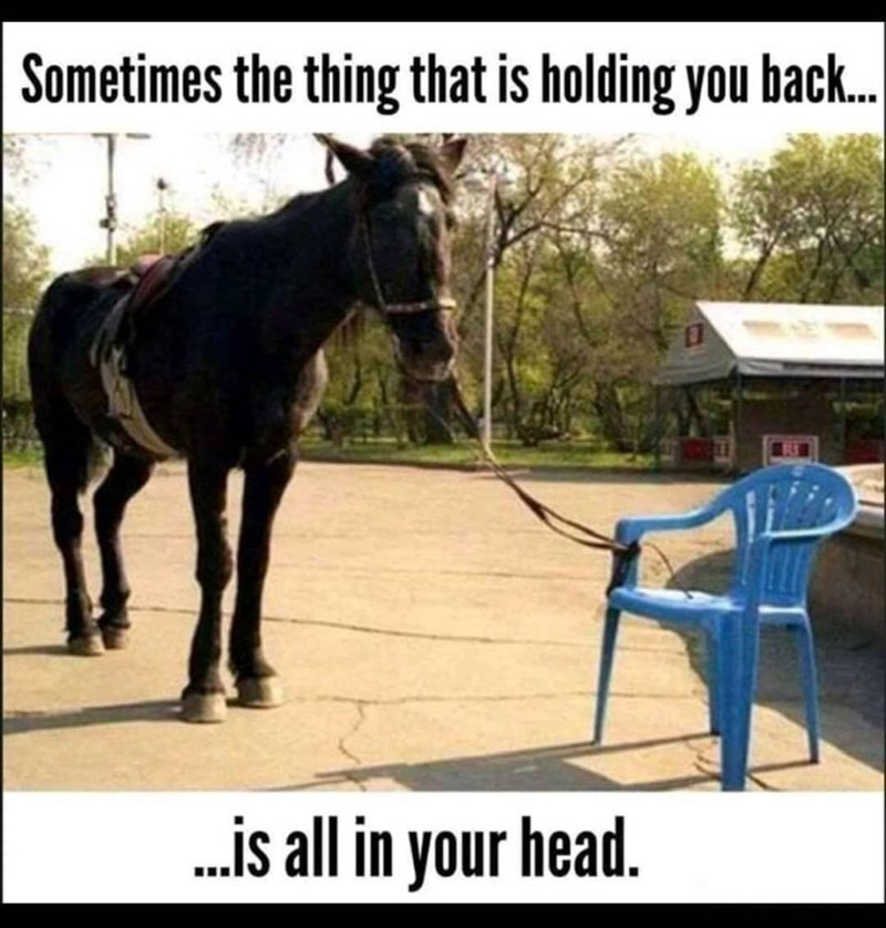 Horse - Sometimes the thing that is holding you back. .is all in your head.