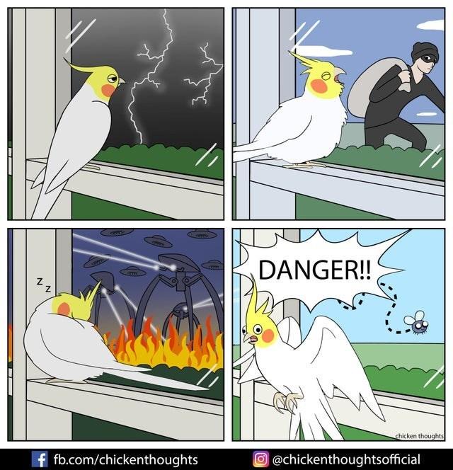 Bird - DANGER! chicken thoughts f fb.com/chickenthoughts O@chickenthoughtsofficial N