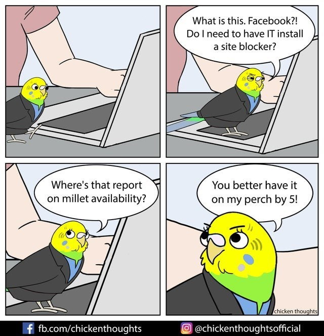 Bird - Bird - What is this. Facebook?! DoI need to have IT install a site blocker? Where's that report on millet availability? You better have it on my perch by 5! chicken thoughts f fb.com/chickenthoughts O @chickenthoughtsofficial