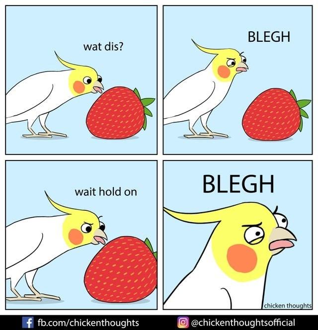 Bird - BLEGH wat dis? BLEGH wait hold on chicken thoughts f fb.com/chickenthoughts O @chickenthoughtsofficial