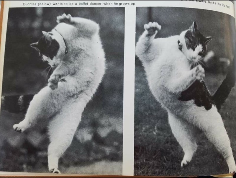 Canidae - ays lands on its fee Cuddles (below) wants to be a ballet dancer when he grows up