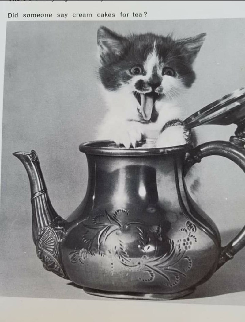 Cat - Did someone say cream cakes for tea ?
