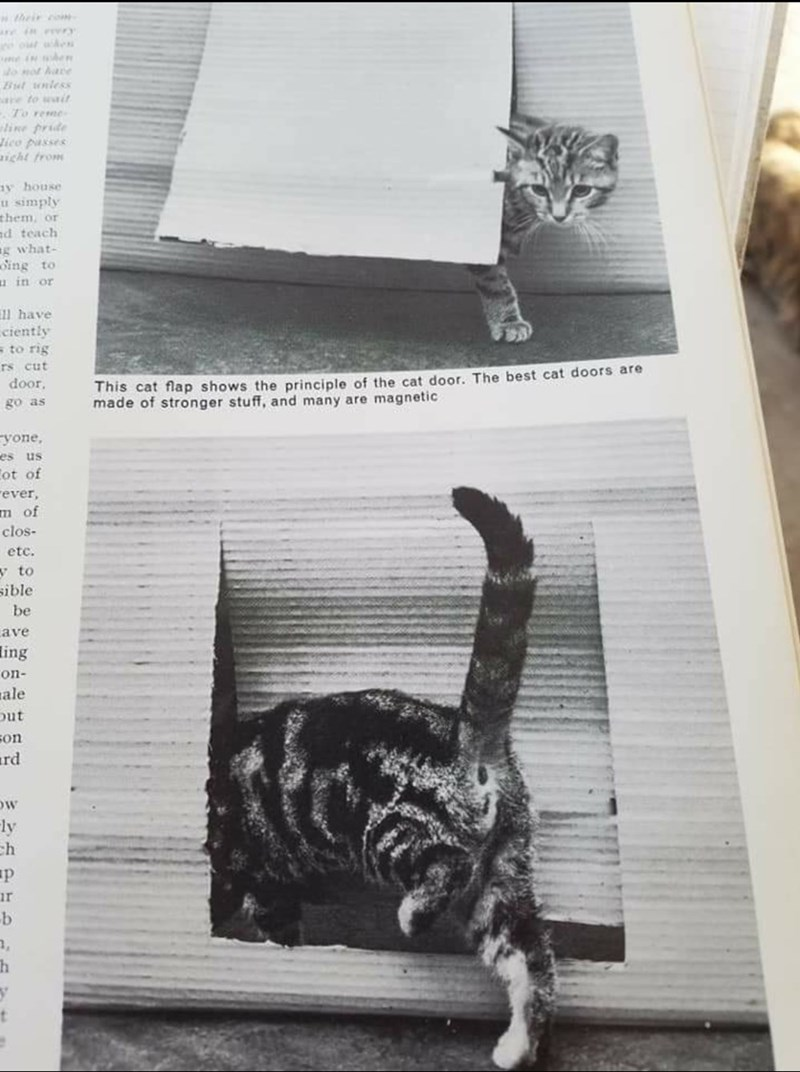 Cat - their coN re in erery e in en o not hare But uniess are to wait To reme line pride Jico passes ight from ay house u simply them, or nd teach g what- oing to u in or ll have ciently to rig rs cut door, This cat flap shows the principle of the cat door. The best cat doors are made of stronger stuff, and many are magnetic go as yone, es us Cot of rever, m of clos- etc. y to sible be ave ing on- ale Dut son ard Fly ch ur b