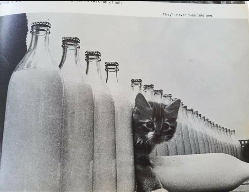 Cat - Cask full of milk etting own They'll never miss this one.