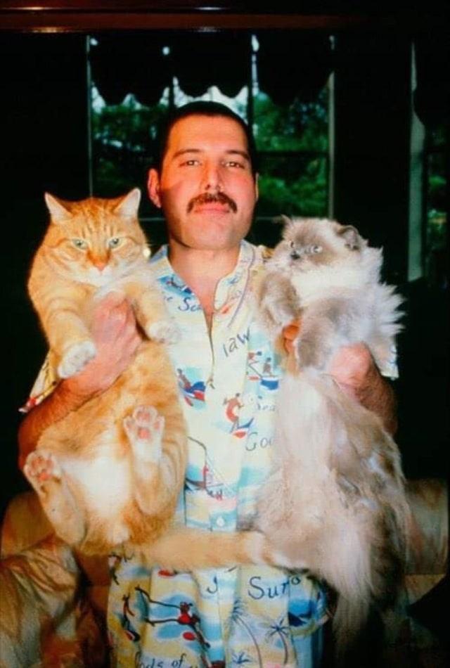 Cat - taw Goo Sur ds of