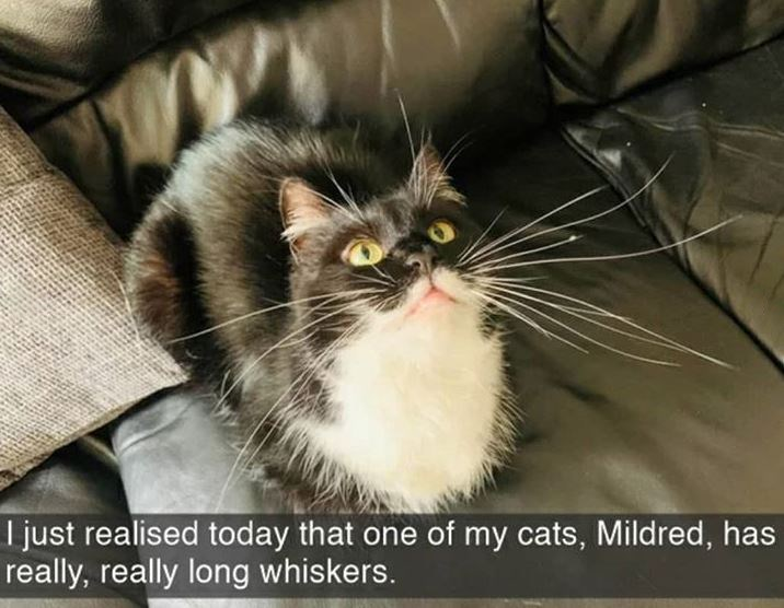 Cat - I just realised today that one of my cats, Mildred, has really, really long whiskers.
