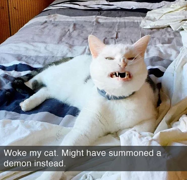 Cat - Woke my cat. Might have summoned a demon instead.