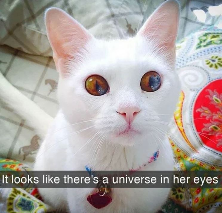 Cat - It looks like there's a universe in her eyes
