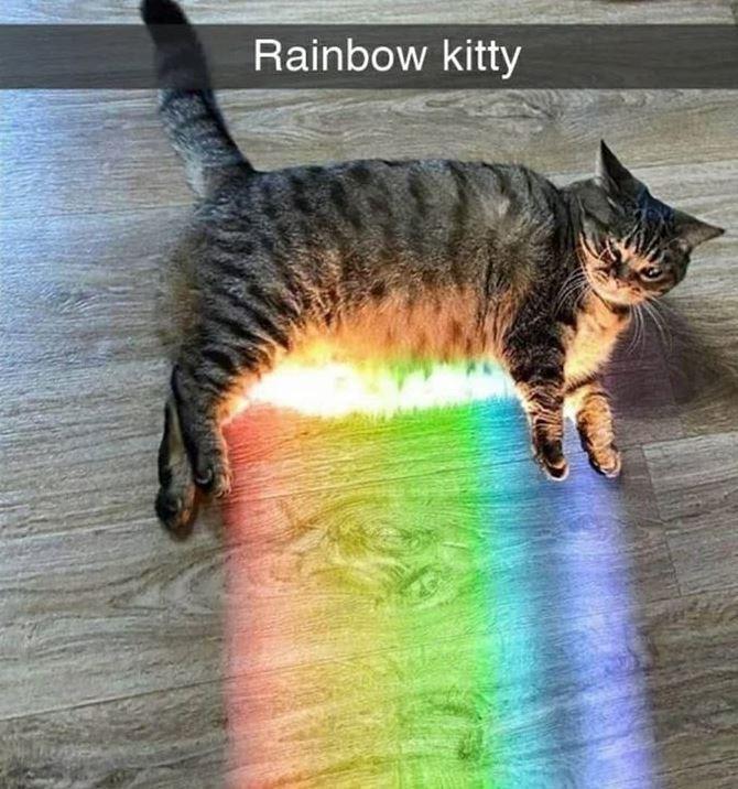 Cat - Rainbow kitty