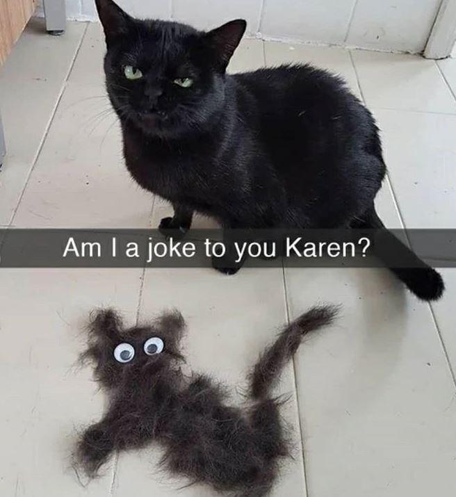 Cat - Am la joke to you Karen?