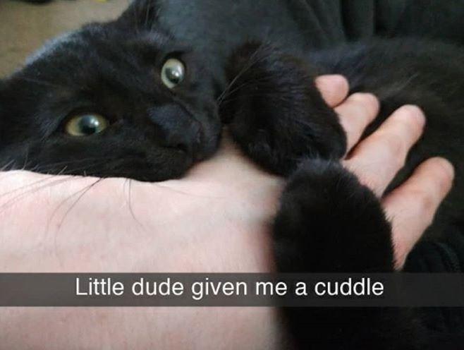 Cat - Little dude given me a cuddle