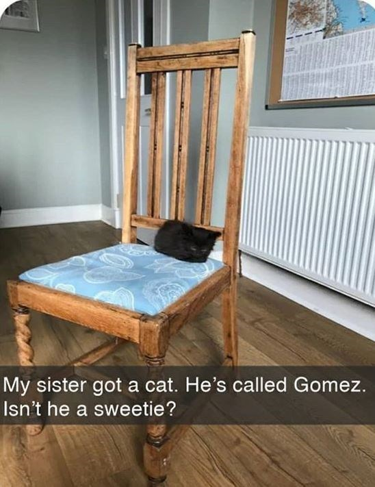 Furniture - My sister got a cat. He's called Gomez. Isn't he a sweetie?