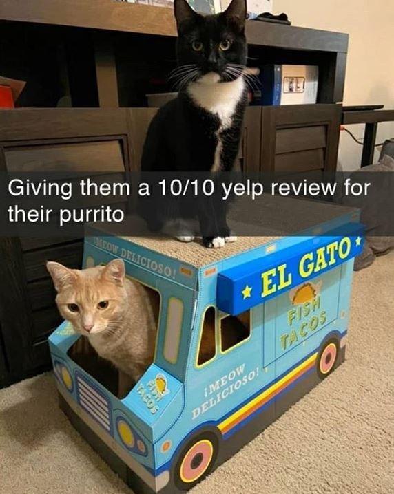 Cat - Giving them a 10/10 yelp review for their purrito MEOW DELICIOSO! *EL GATO FISH TACOS iMEOW DELICIOSO TAG