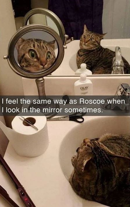 Cat - I feel the same way as Roscoe when I look in the mirror sometimes.