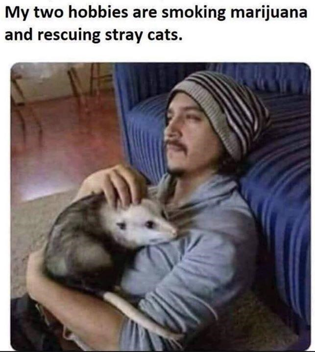 Friendship - My two hobbies are smoking marijuana and rescuing stray cats.