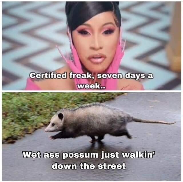 Photo caption - Certified freak, seven days a week. Wet ass possum just walkin down the street