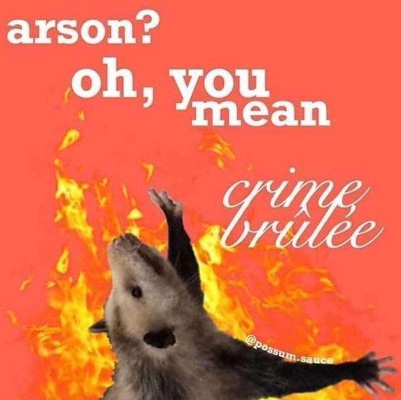Canidae - arson? oh, you mean le @possum.sauce