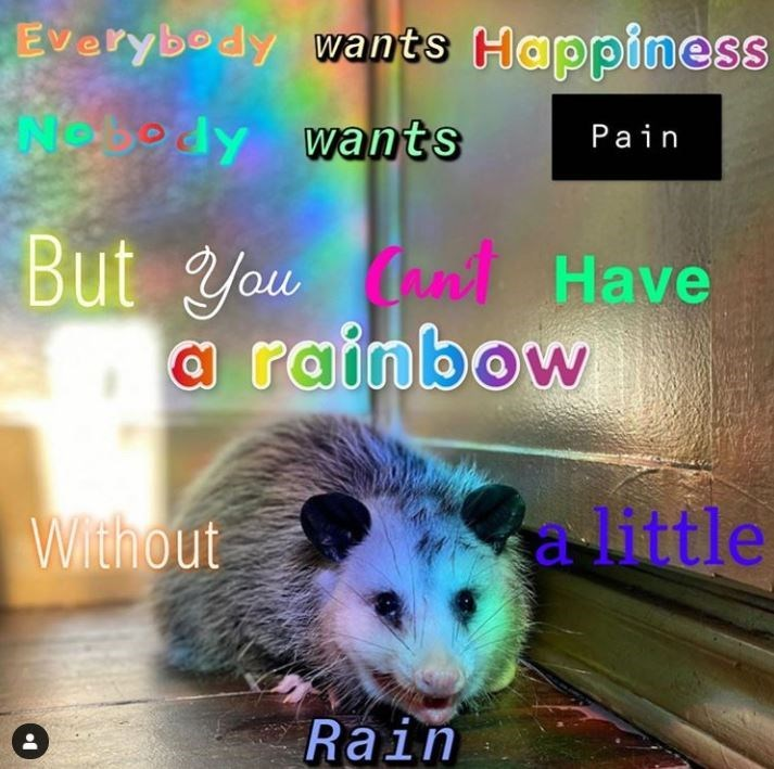 Hamster - Everybody wants Happiness edy wants Pain But You nt Have rainbow With out a-little Rain