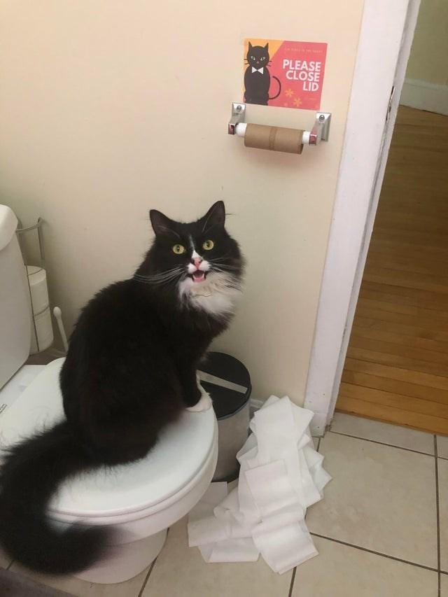 Cat - PLEASE CLOSE LID