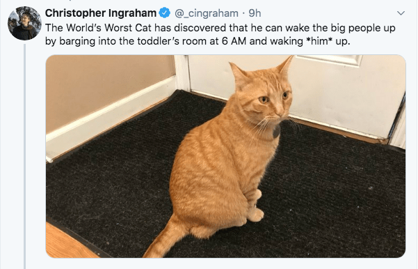 Cat - Christopher Ingraham O @_cingraham · 9h The World's Worst Cat has discovered that he can wake the big people up by barging into the toddler's room at 6 AM and waking *him* up.