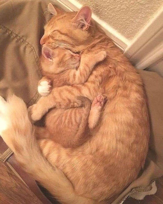 adorable wholesome aww photo pic of orange mama cat sleeping cuddling her baby kitten