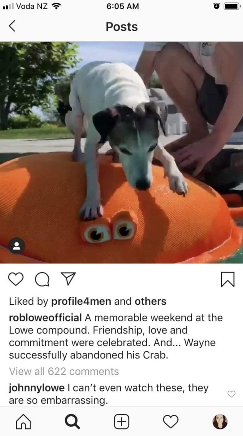 Dog breed - l Voda NZ ? 6:05 AM Posts Liked by profile4men and others robloweofficial A memorable weekend at the Lowe compound. Friendship, love and commitment were celebrated. And... Wayne successfully abandoned his Crab. View all 622 comments johnnylowe I can't even watch these, they are so embarrassing. (+)