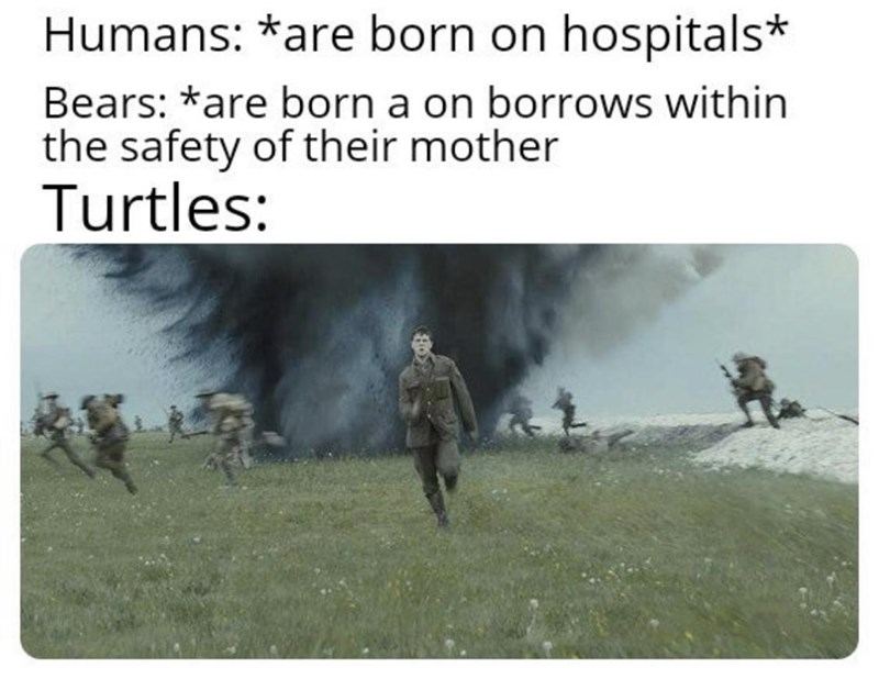 Text - Humans: *are born on hospitals* Bears: *are born a on borrows within the safety of their mother Turtles: