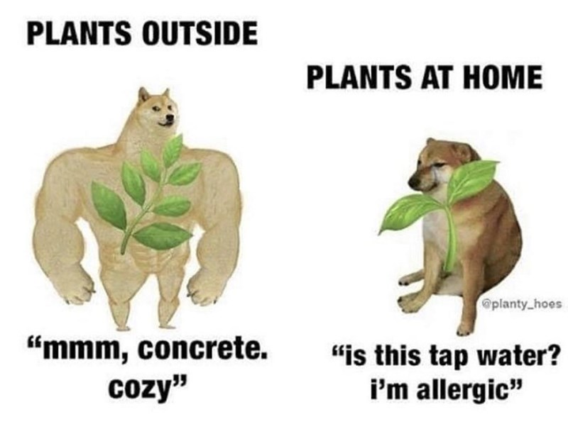 """Organism - PLANTS OUTSIDE PLANTS AT HOME @planty_hoes """"mmm, concrete. cozy"""" """"is this tap water? i'm allergic"""""""