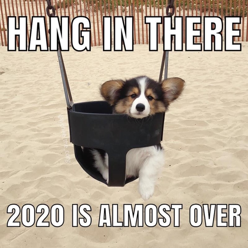 Dog - HANG IN THERE 2020 IS ALMOST OVER alychel the corgi