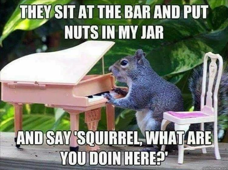 """Squirrel - THEY SIT AT THE BAR AND PUT NUTS IN MY JAR AND SAY 'SQUIRREL, WHAT ARE YOU DOIN HERE?"""""""